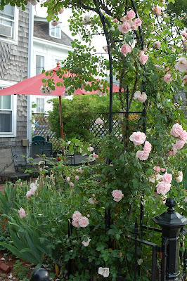 Roses in Provincetown MA Photo taken by Tim