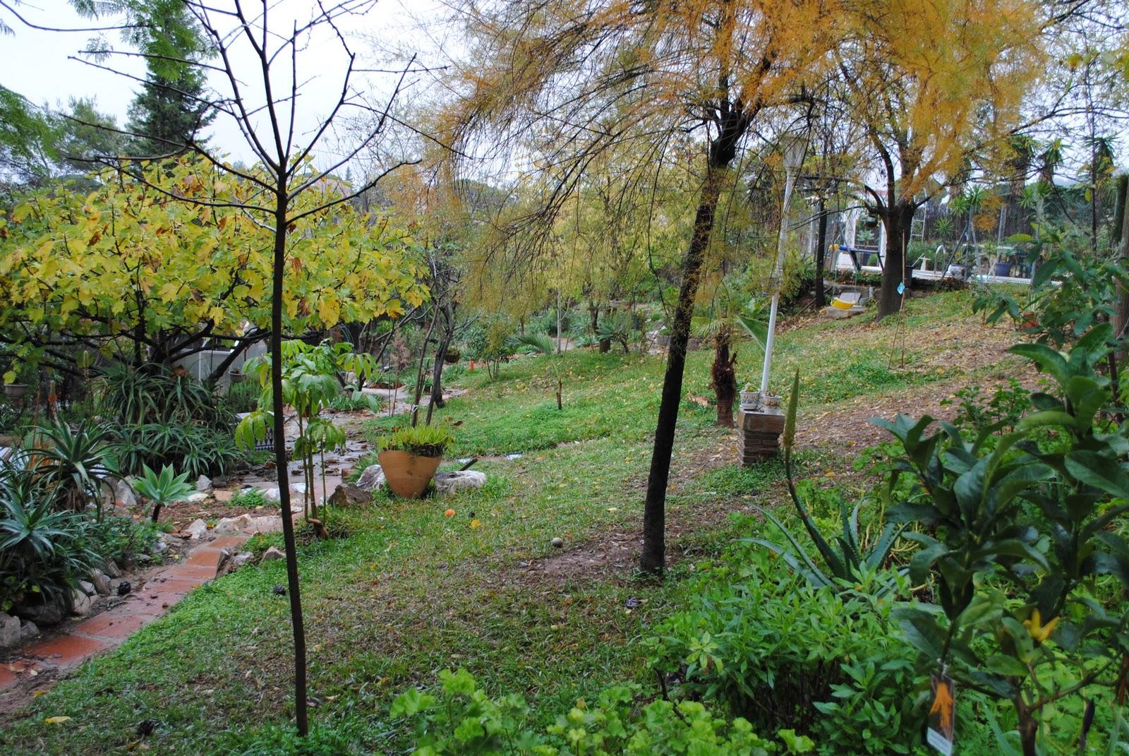 Un jardin bajo los pinos noviembre 2010 for Capillas de velacion jardin de los pinos