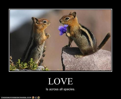 funny pictures chipmunks have love