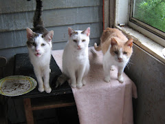 LoverBoy, Whitey, Willie