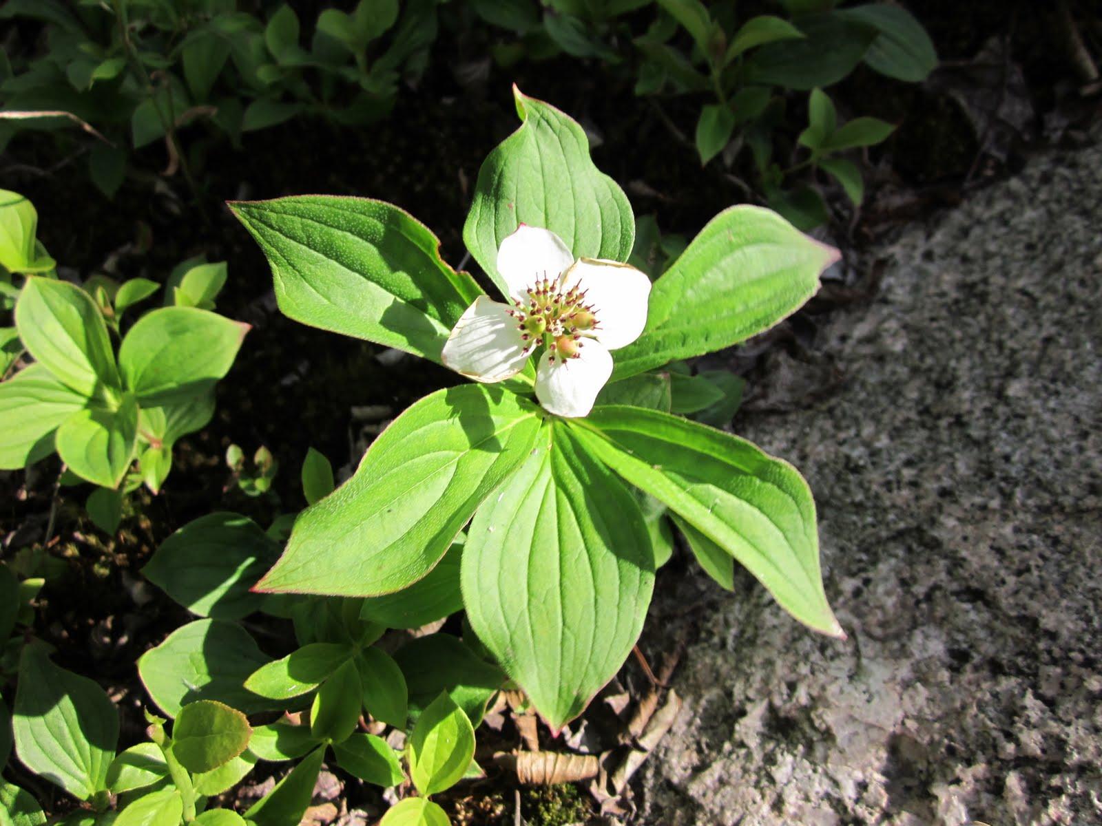 Shrubs And Wildflowers Erringtons Wilderness Island