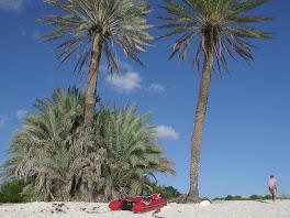 Les 2 palmiers de notre mouillage de La Blanquilla...
