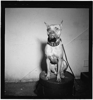 Billie Holiday's dog