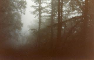 Imagen de un bosque de Aokigahara nubloso con aspecto aterrador