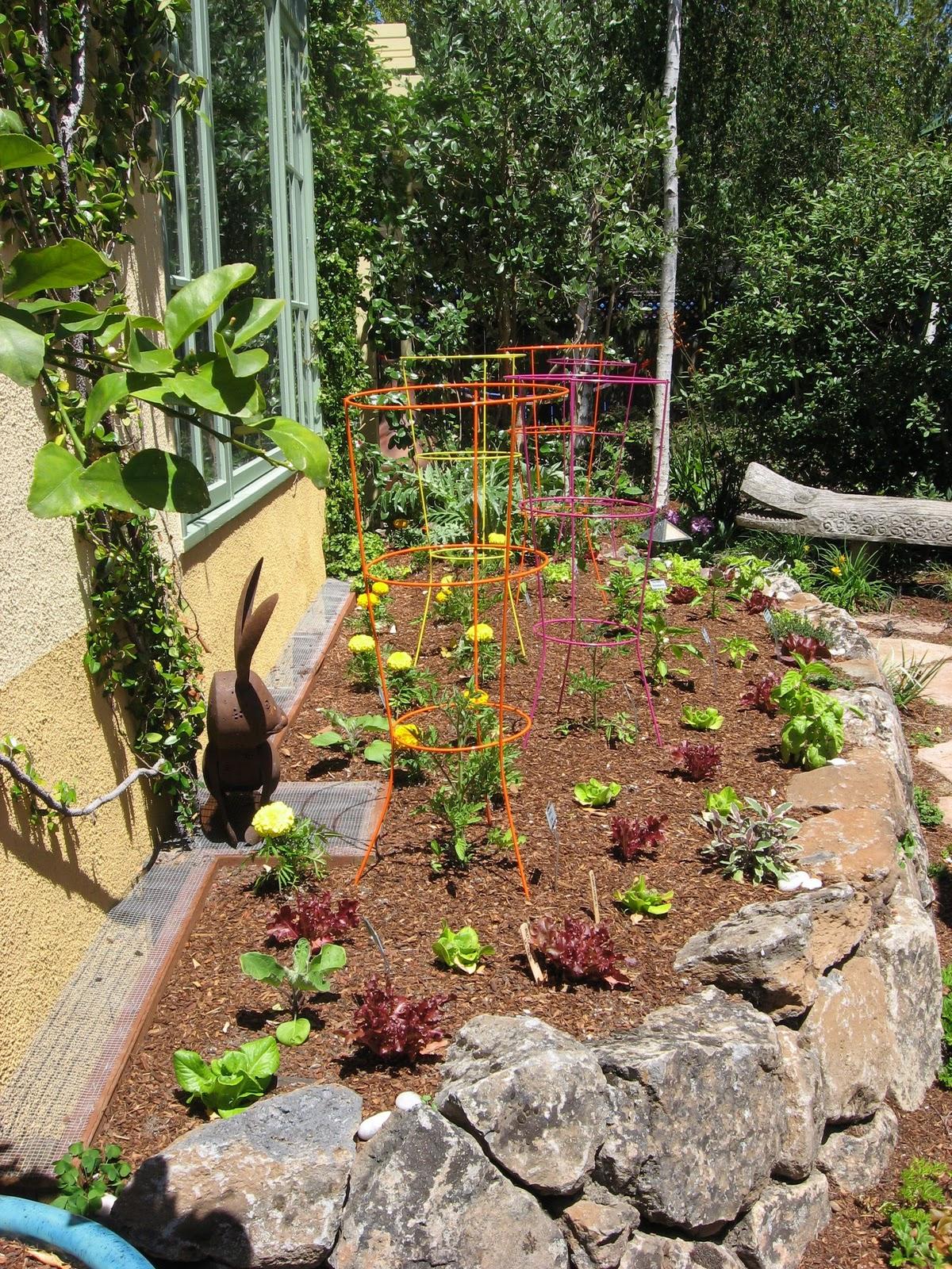 urban artichoke: A Call for Edible Gardens in Mountain View CA