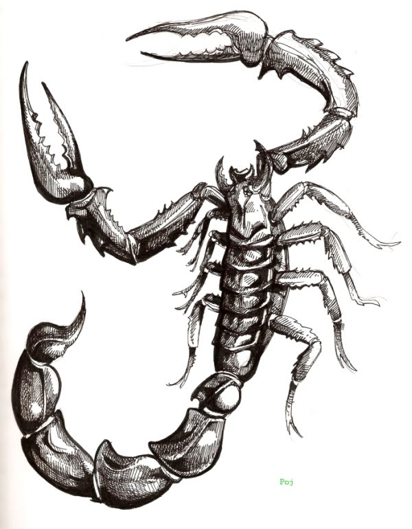 scorpio tattoo designs. Scorpio tattoo designs