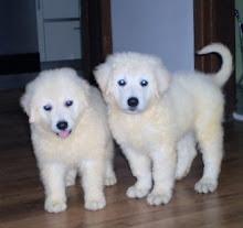 Filhotes com 7 semanas