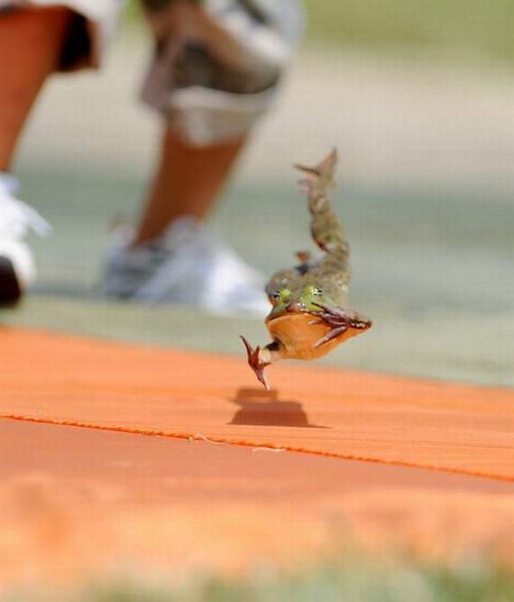 http://3.bp.blogspot.com/_YyXZ9LFygq0/THyiwJNYcII/AAAAAAAAAoo/cKmZYrDccCY/s1600/jumping-frogs10.jpg