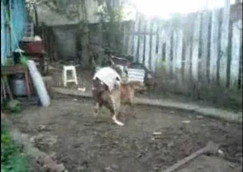 Video) Benar2 Dech Anjing Namanya: Koq Bisa Gantian Kaw