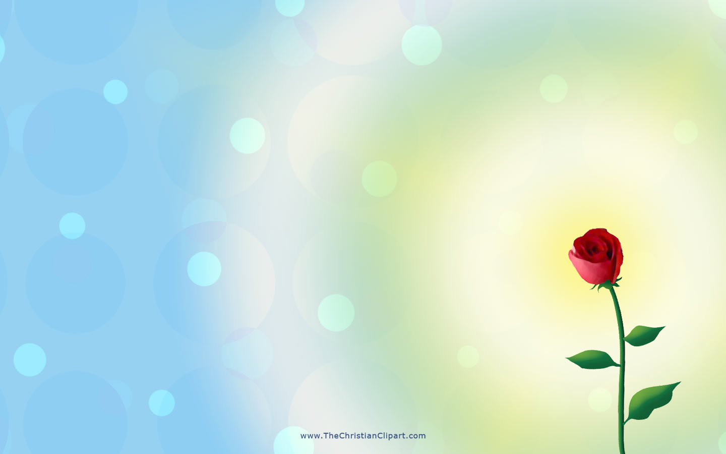 Wedding rose background was