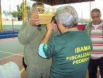 IBAMA INICIA FISCALIZAÇÃO EM TORNEIOS DE PÁSSAROS CANOROS