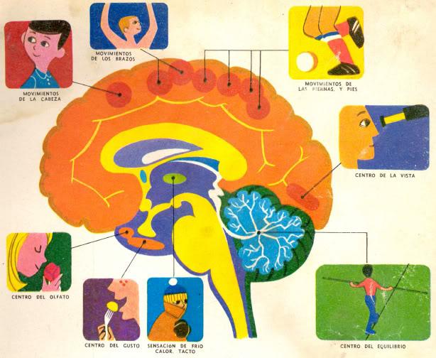 Funciones de cerebro