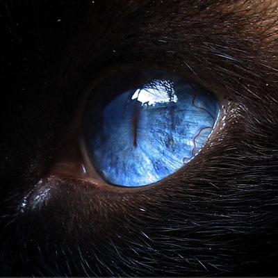 [_ojo-azul.jpg]