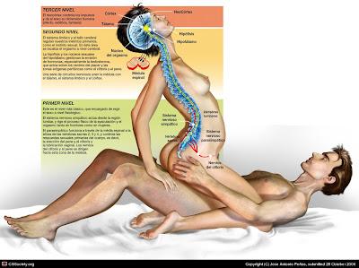 Los beneficios del orgasmo para la salud - INTIMINA
