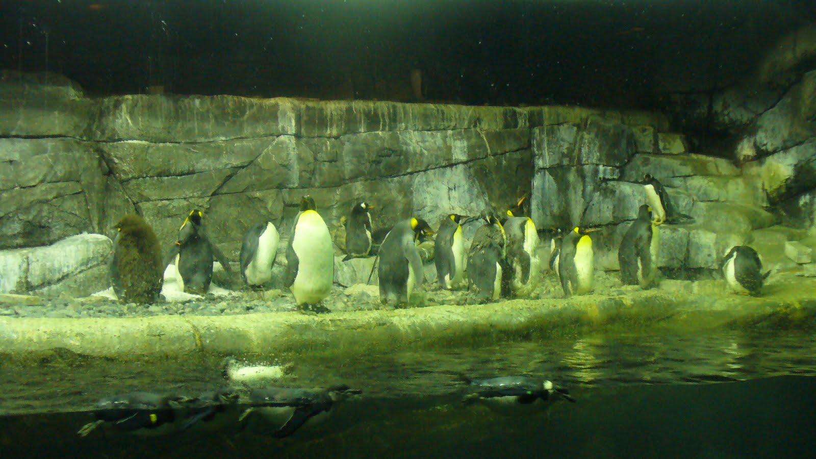 Newport Aquarium Coupons