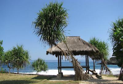 Pandanus trees on Nusa Lembongan, Bali, Indonesia