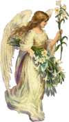 Angel for the others