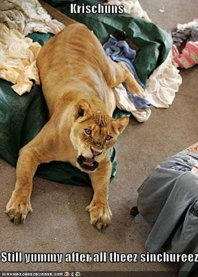 Shackle the lion LOLLion concept by little gator