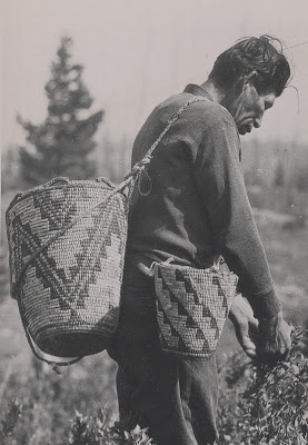 Picking huckleberries in Columbia National Forest, ca 1936