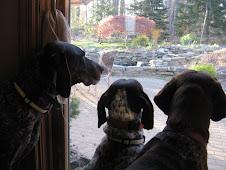 Bird Watching!