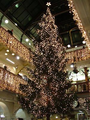 How much fir the tree?