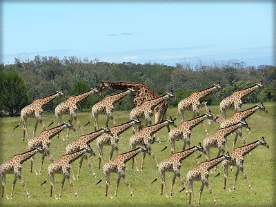 Flock of Killer Giraffes