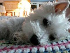 Dooley Dog