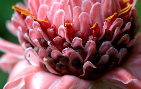 cris-rosas  de maio