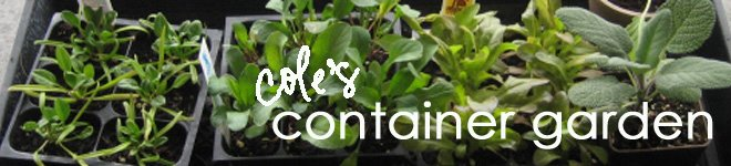 Cole's Kitch: Container Garden