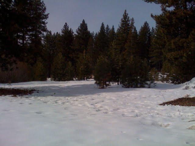 Meadow Behind Condo