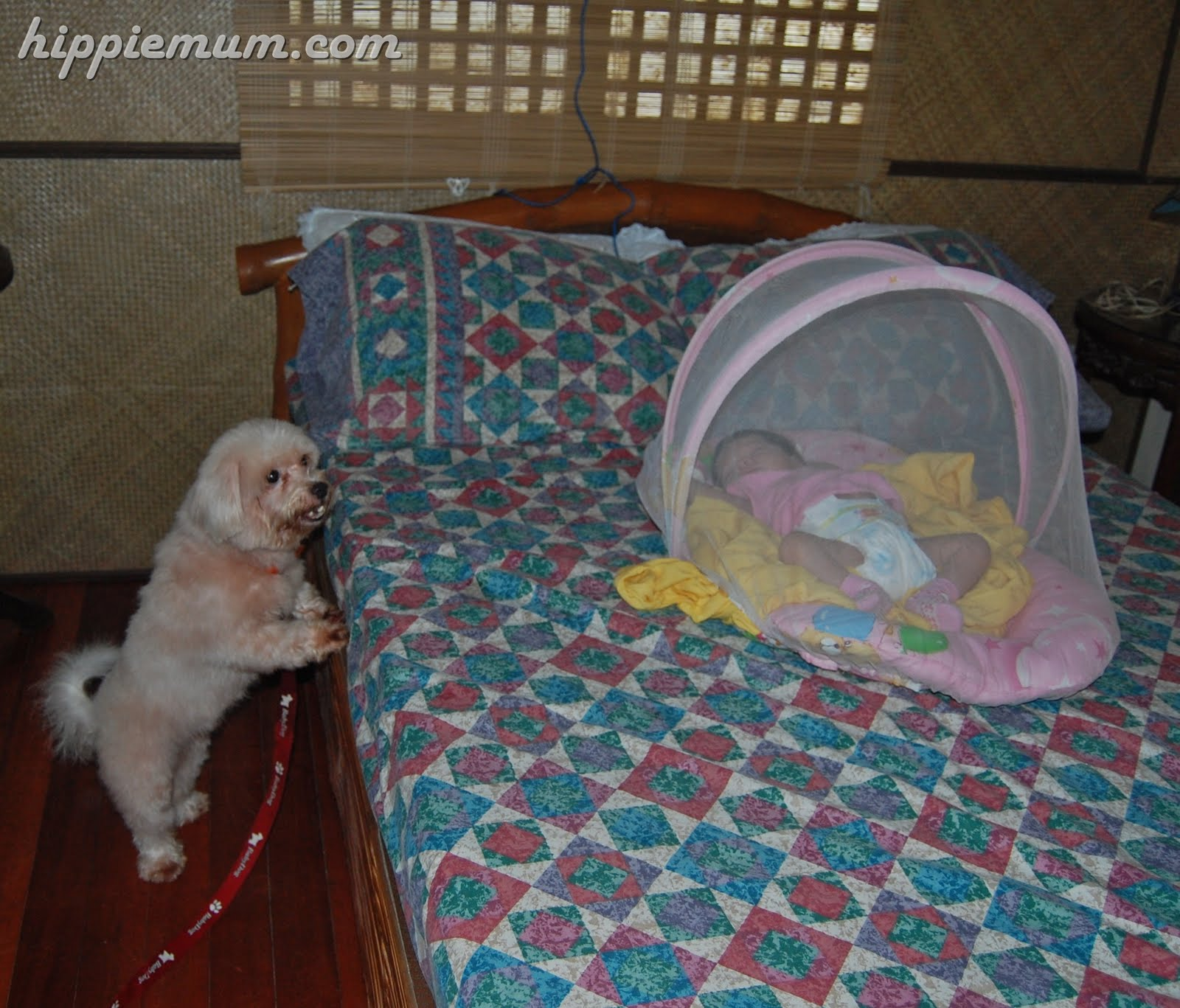 Crib for babies philippines - Co Sleeping Vs Crib Hippie Mum