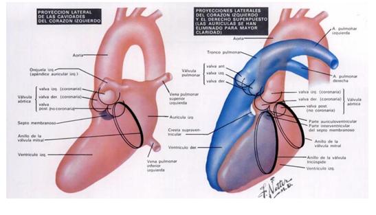 cardiorespiratoriouq: mayo 2010