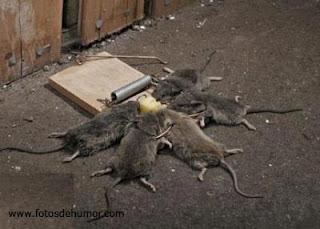 YOU ARE GOING TO THE SHIFT HA HA HA (OLIMPIADAS FORERAS) Rata+trampa+mortal