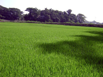 Lush green of Bangladesh