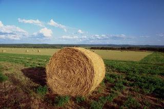 foto agricoltura