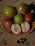 sawo duren durian