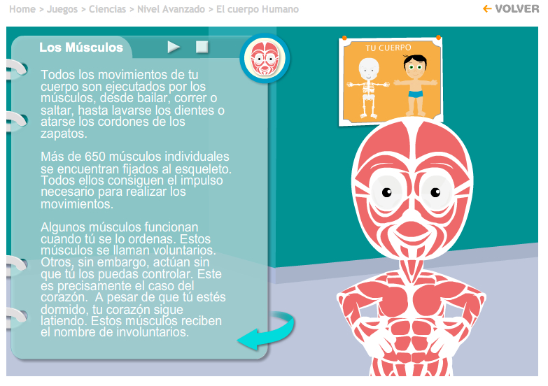 Anatomía y Fisiología-UAL: Anatomía para niños.