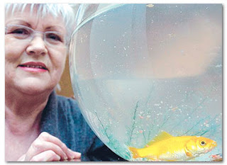 Ikan emas ajaib hidup tanpa air