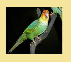 Bethet Bird