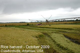 rice harvest Arkansas