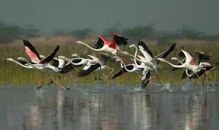 nalsarovar bird sanctuary at sanand gujarat