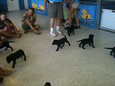 A picture of the puppies running around in a room with adults sitting on the floor