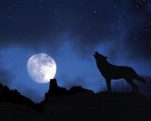 a la sombra  de tu luna . . .