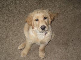 Little Cooper is getting HUGE!