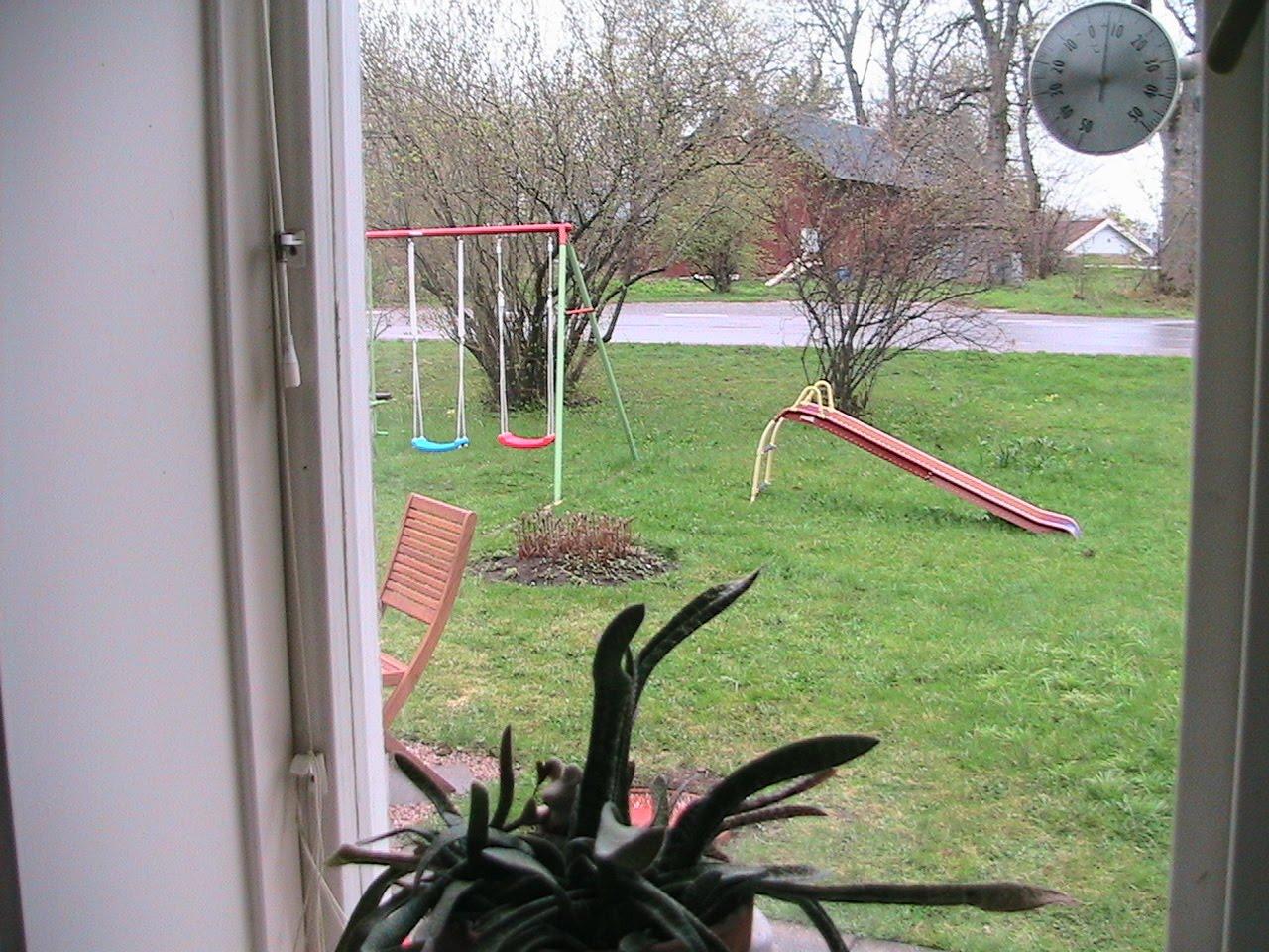 En amatörs trädgård: maj 2010