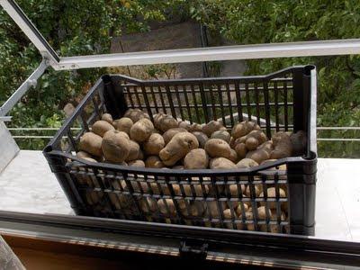 patate imperiali
