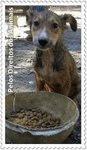 Pelos Direitos dos Animais (selo de Marisa Araújo)
