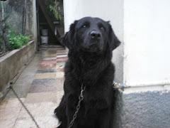 Em Defesa dos Cães Acorrentados