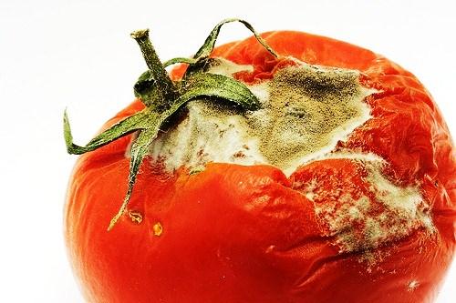 Tomato Bot