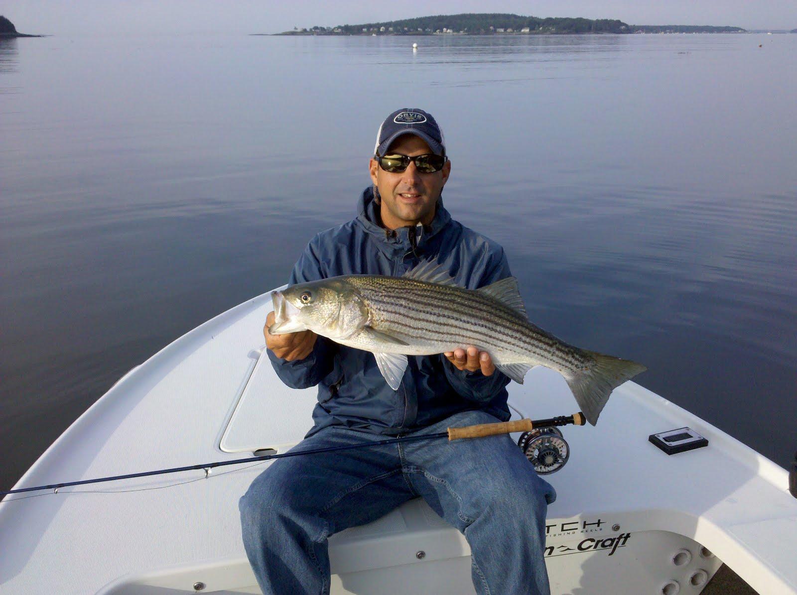 Maine striper fishing reports maine striper fishing for Maine fishing guide